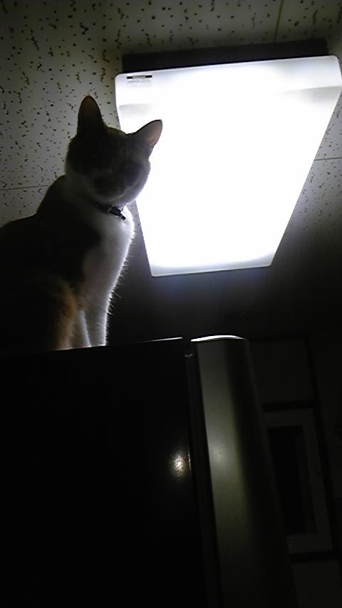 逆光で見えないですが。
